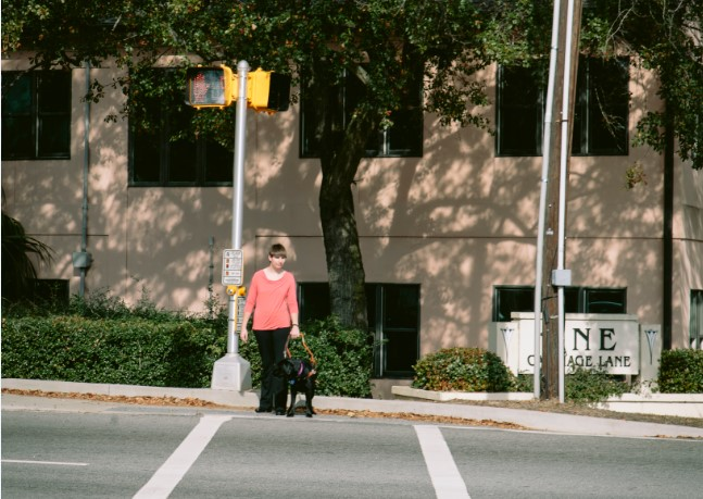 Dear Guide Dog Abby: How do you help your owner cross the street?